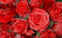 Róże - Kliknięcie w obrazek spowoduje wyświetlenie jego powiększenia