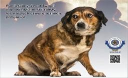pies - Kliknięcie w obrazek spowoduje wyświetlenie jego powiększenia